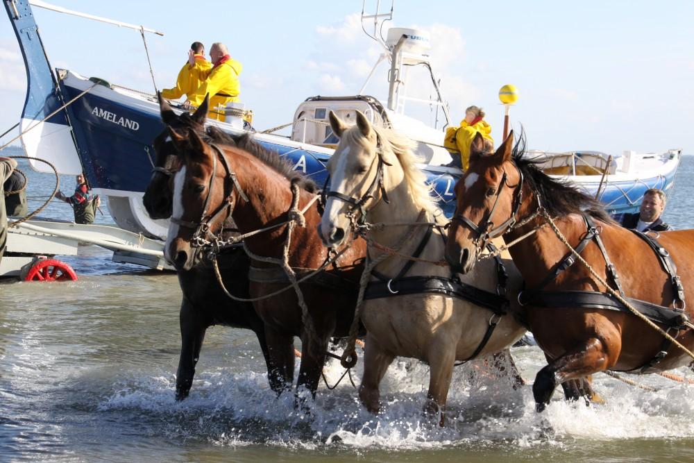 Wat te doen? Reddingboot met paarden